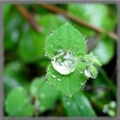 Dew Drops Wallpaper icon