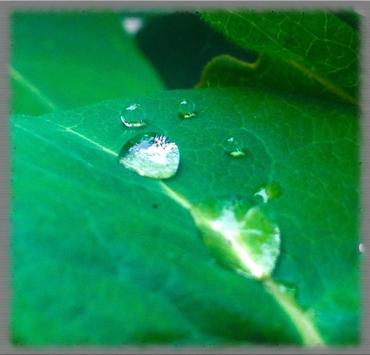 Dew Drops Wallpaper screenshot 1