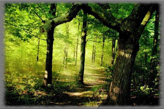 Magical Forests Wallpaper apk screenshot