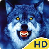 Cool Wolf HD Wallpapers icon