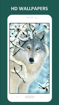Cool Wolf HD Wallpapers screenshot 2