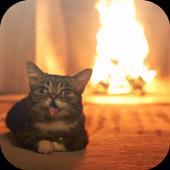 Cat 3D Video Live Wallpaper icon