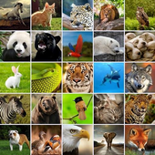 +1100 Animal Wallpapers icon