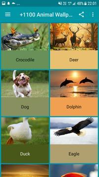 +1100 Animal Wallpapers screenshot 13