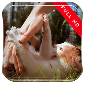 Super Cute Jumping Cat LWP icon