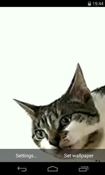 Cat licks glass Video LWP poster