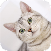 Cats Video Wallpapers icon