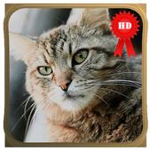 Cat World Live Wallpaper icon
