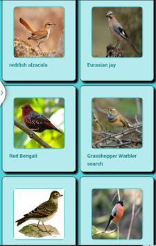 Bird Sound screenshot 11