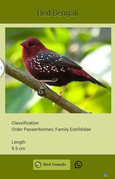 Bird Sound screenshot 12