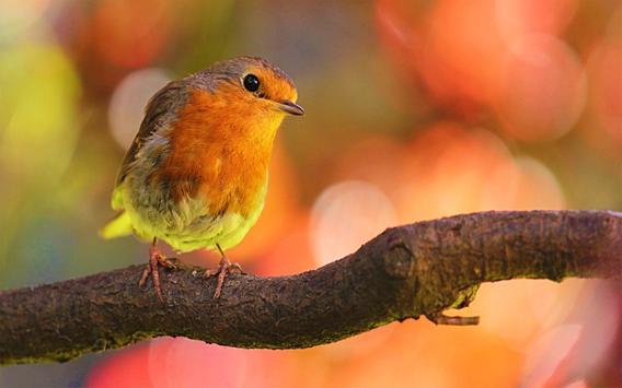 Bird Sound screenshot 1