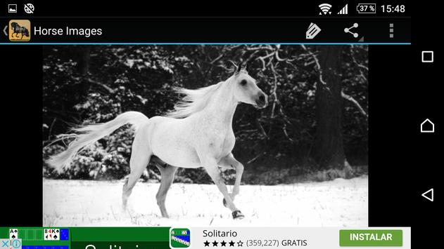 Horse Pictures apk screenshot