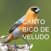 Canto Bico De Veludo icon