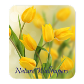 Nature Wallpapers HD icon