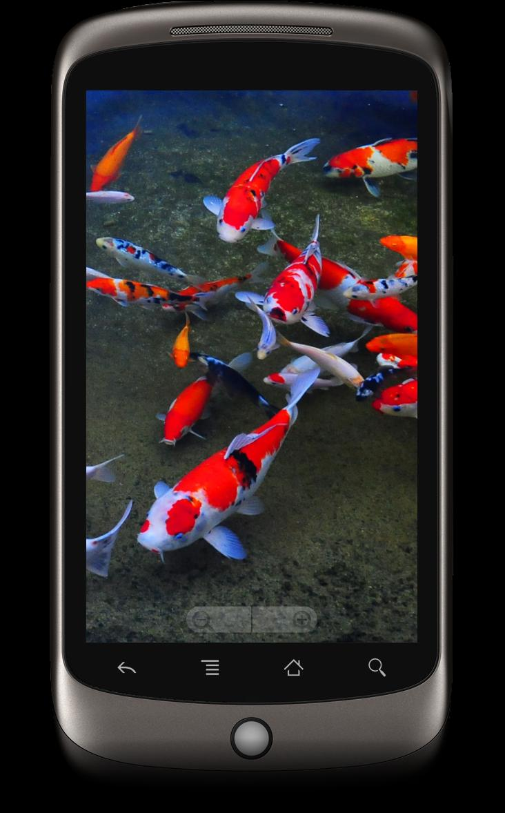 Koi Fish 3d Live Wallpaper For Android Apk Download