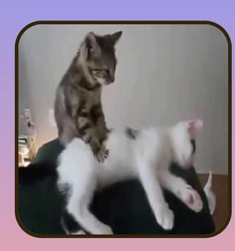 Free funny videos. screenshot 2