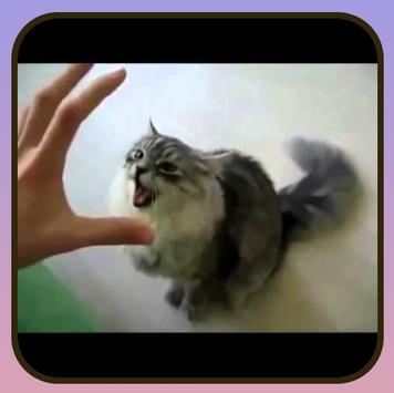 Free funny videos. screenshot 4
