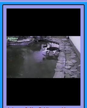 Free funny videos. screenshot 6