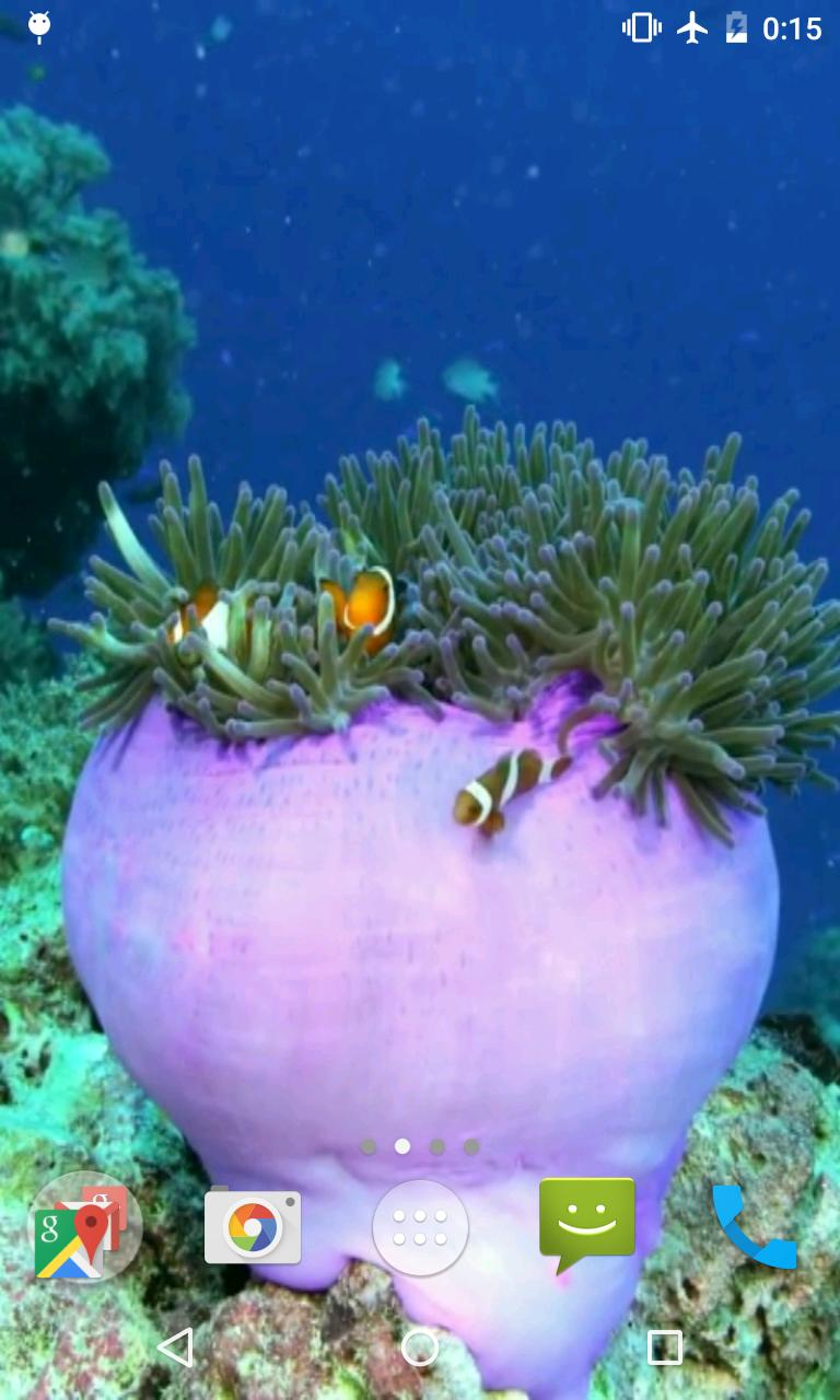 Clownfish Video Live Wallpaper For Android Apk Download