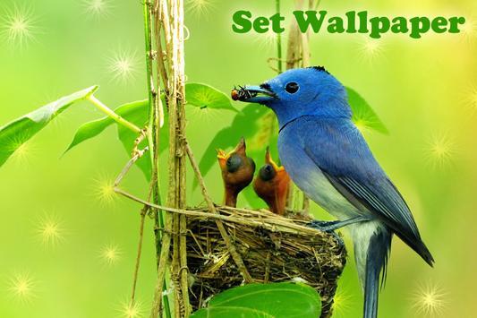 Birds Live Wallpaper screenshot 3
