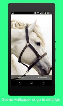 Animal 3D Live Wallpaper apk screenshot
