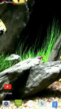 Other Aquarium Video Wallpaper apk screenshot