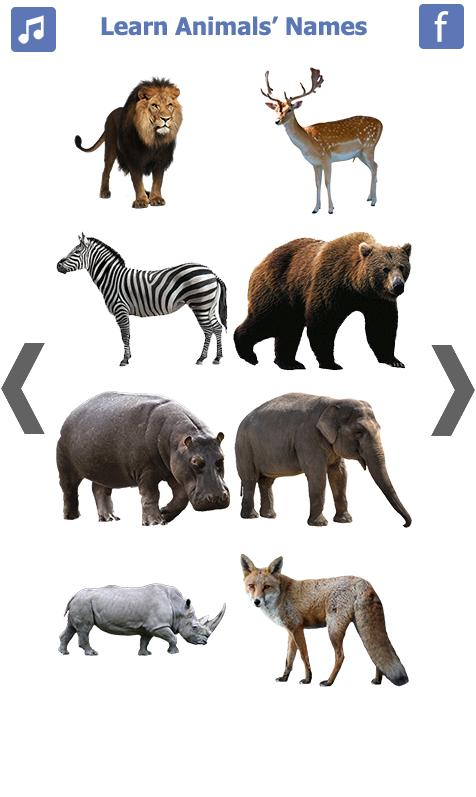 Learn Animals Name Animal Sounds