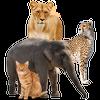 تعليم اصوات الحيوانات و صور و اسماء الحيوانات ikona