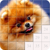 Puzzles and Guess the Breed of Dogs icon