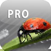 ColorUp - Photo Editor icon