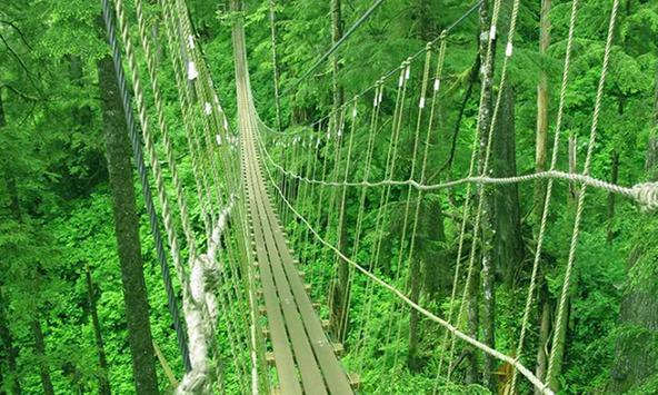 Tongass National Forest Escape apk screenshot