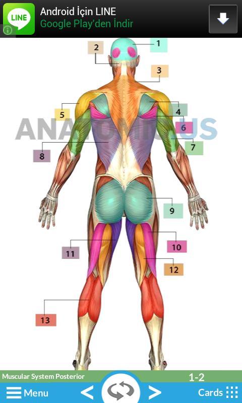 Tarjetas de Anatomía Descarga APK - Gratis Educación Aplicación para ...