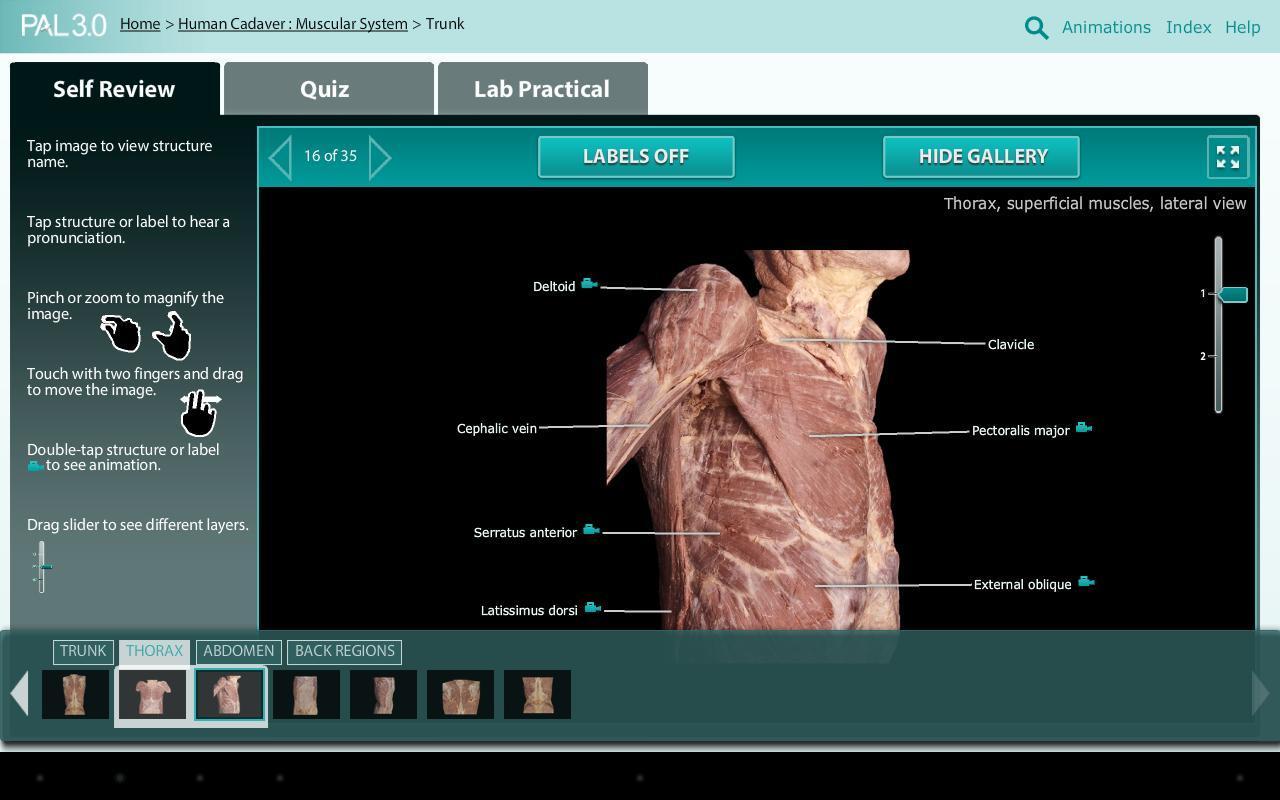 Скачать Practice Anatomy Lab (PAL3) APK - бесплатно Образование ...