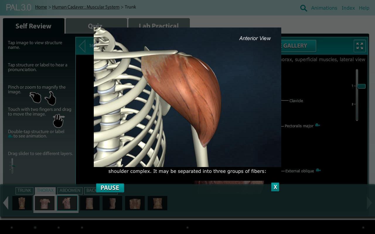 Practice Anatomy Lab (PAL3) APK تحميل - مجاني تعليم تطبيق لأندرويد ...