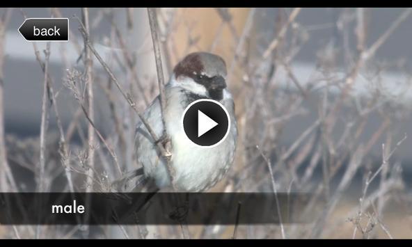 Birds of your Town apk screenshot