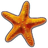 Fish Catch - Best Free Game icon