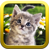 Kitty Puzzles icon