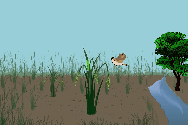 Animasi Siklus Rantai Makanan For Android Apk Download