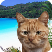 Find the cat on vacation icon
