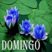 Domingo icon