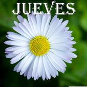 Jueves icon