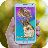 Mouse run in phone Prank icon