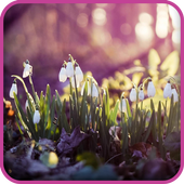 Spring Nature Wallpaper icon