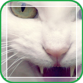 Mystery Cat icon