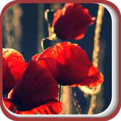 Big Leaves of the Red Flower icon