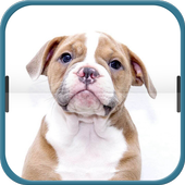 Brown Belldog icon