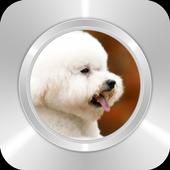 Cute White Puppy icon