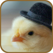 Chicken With a Hat icon