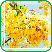 Clusters of Yellow Flowers icon