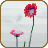 Flowers in the Snow icon
